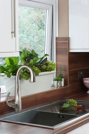 Kitchen Solutions: Herb Window Boxes